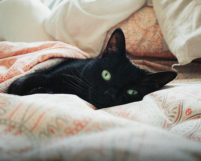 Creature Comforts:ゲームデベロッパは相変わらずかわいいペットを飼っている